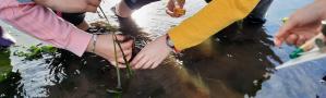 Pradeiras Mariñas, tesouros de biodiversidade (proxecto ZOSTERA)