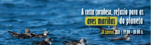 A costa coruñesa, refuxio para as aves mariñas do planeta