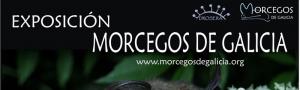 Exposición Murciélagos de Galicia