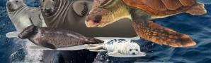 Xornadas de Formación: Asistencia e Estudo dos Réptiles e Mamíferos Mariños en Galicia CEIDA
