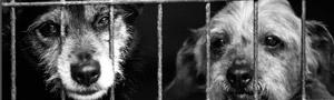 Xornadas Abandono e Adopción en Galicia