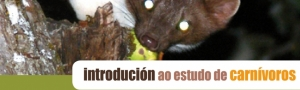 Curso Estudo Carnivoros CEIDA