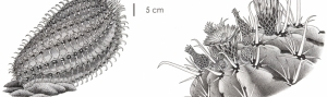 Ilustraciencia5: Exposición da 5ª edición do Premio Internacional de Ilustración Científica e Naturalista Ilustraciencia