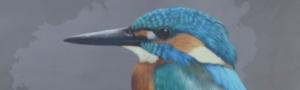 Exposicion Aves de Galicia CEIDA
