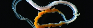 Exposicion Vermes mariños baixo a lupa CEIDA