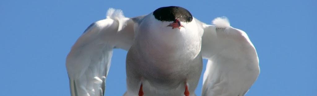 Aves do Norte ao Sur CEIDA