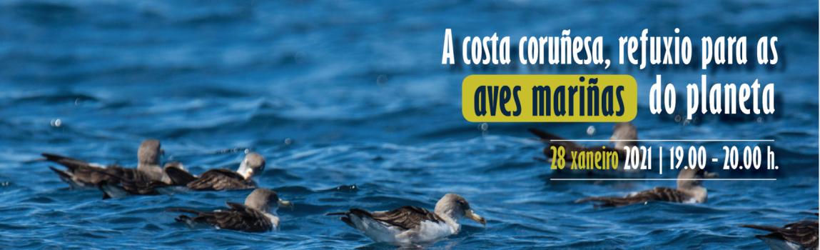 La costa coruñesa, refugio para las aves marinas del planeta