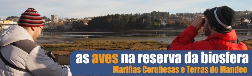 As aves na reserva da biosfera Mariñas Coruñesas e Terras do Mandeo CEIDA