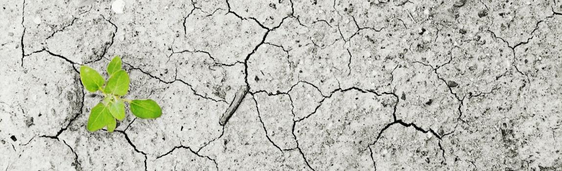 Emerxencia Climática: Programa para unha Transición Ecolóxica