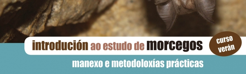 Curso Estudo Morcegos Edicion Veran CEIDA