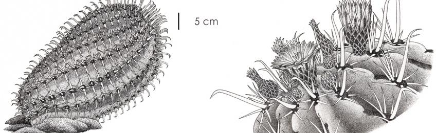 Ilustraciencia5: Exposición de la 5ª edición del Premio Internacional de Ilustración Científica y Naturalista Ilustraciencia