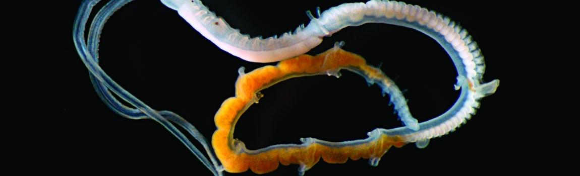 Vermes mariños baixo a lupa exposicion CEIDA