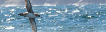 Bases para a declaración dunha ZEPA no Golfo Ártabro