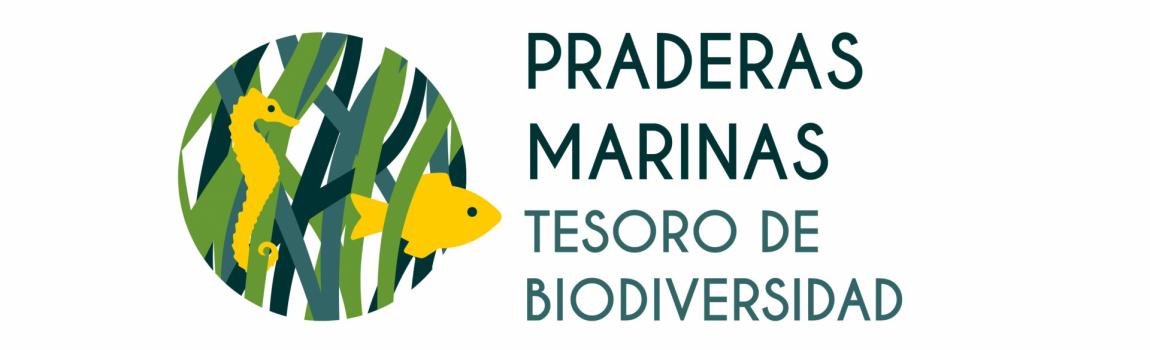 Praderas marinas, tesoros de biodiversidad