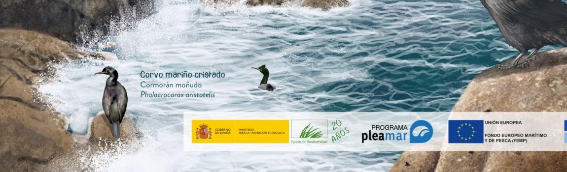 Materiales divulgativos y técnicos del proyecto 'Un mar de vida para la ciudadanía: Biodiversidad y Servicios de los Ecosistemas del Golfo Ártabro'