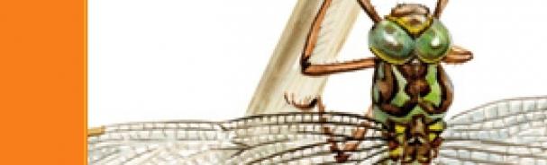 Obradoiro tecnics basicas debuxo da natureza CEIDA