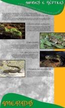 Panel 14. Anfibios e réptiles, sempre perseguidos, máis ameazados ca nunca