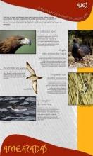 Panel 15. Aves, Galicia un gran observatorio