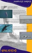 Panel 17. Mamíferos mariños, eses grandes descoñecidos tan achegados a nós
