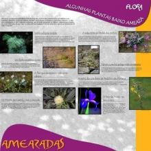 Panel 9 e 10. Flora, algunhas plantas baixo ameaza