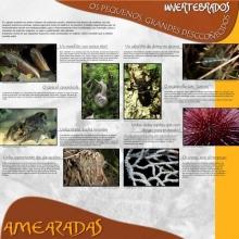 Panel 11 e 12. Invertebrados, os pequenos grandes descoñecidos