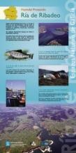 Panel 14. Humidal Protexido Ría de Ribadeo