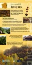 Panel 20. Principais bosques galegos da Rede Natura 2000