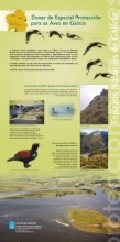Panel 22. Zonas de Especial Protección para as Aves en Galicia