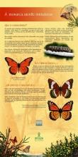 Panel 4: A monarca: unha viaxeira incansable