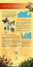 Panel 5: A migración e a vida da monarca