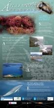 Panel 21. A Galicia submarina é moi diversa
