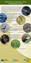 Panel 8: As ZEPAs axudan á conservación das aves máis ameazadas de Galicia